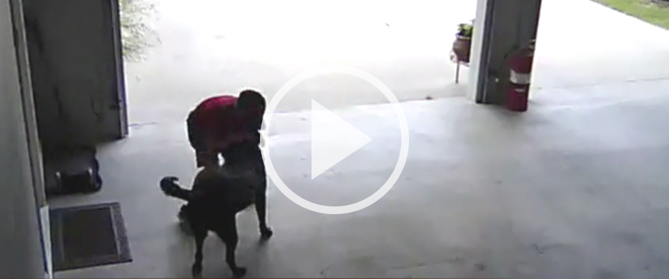 9-Year-Old Sneaks Into Garage to Hug Neighbor's Dog